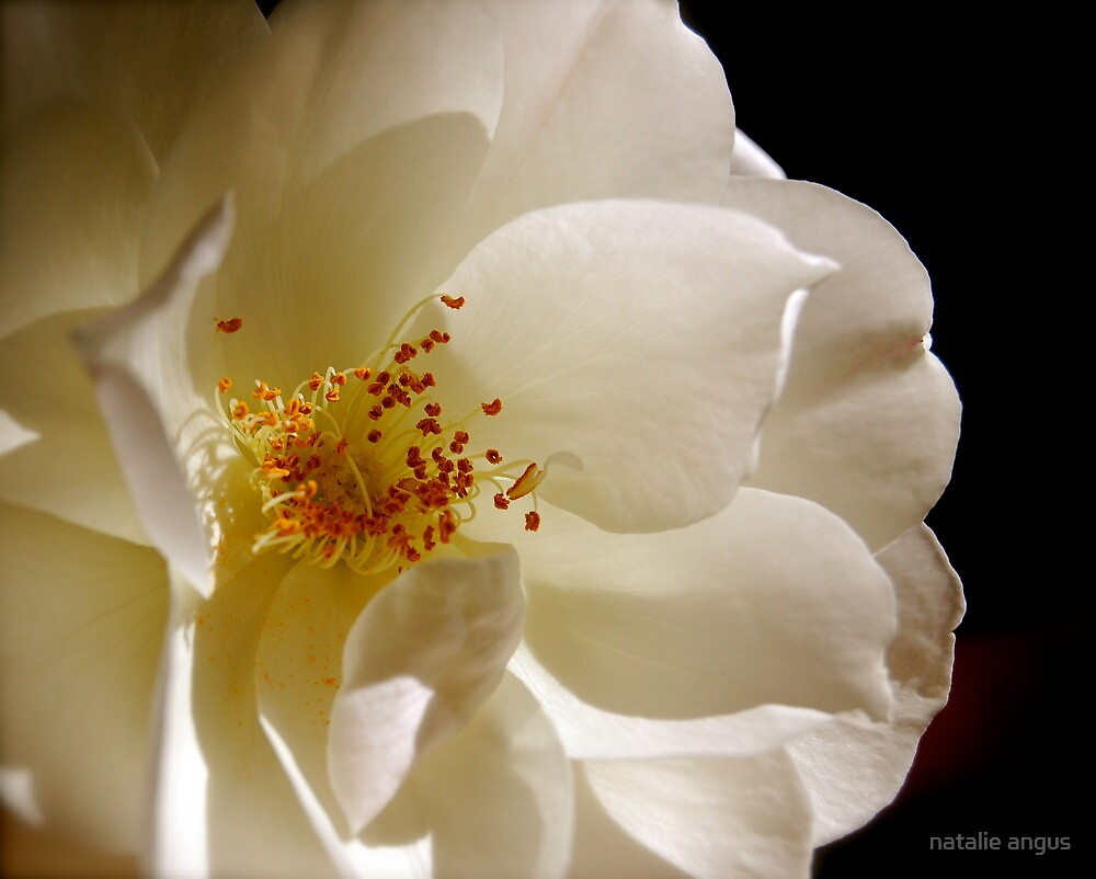 silky petals by natalie angus
