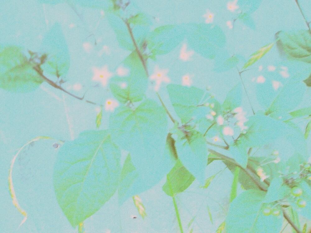 Pastel Flora by Melissa Park