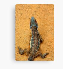 BEARDED DRAGON SCALES Canvas Print