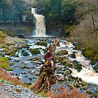 Looking at Thornton Force by Sue Knowles