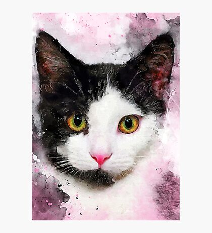 cat Misty #cat #kitty Photographic Print