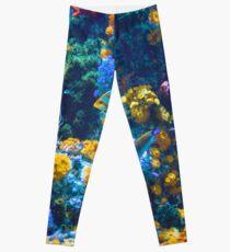 Legging Colorido arrecife de coral