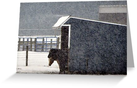Shelter From The Storm by Gayle Dolinger