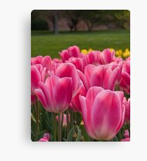 Hobart in Spring Canvas Print