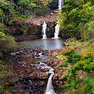 Umauma Falls by Alla Gill