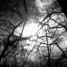 The Light by Josephine Pugh