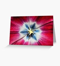 Burgundy Tulip center Greeting Card