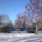 Winter Sun by Davies72