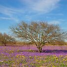 Texas, Beginnings of Spring by Carolyn Staut