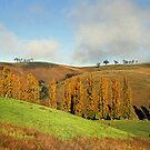 Ensay, East Gippsland, Victoria, Australia by Bev Pascoe