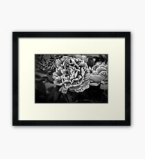Peonies in Black Framed Print