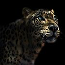 Leopard in dappled light by Narelle Power