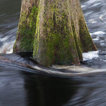 Cypress Tree by WorldDesign