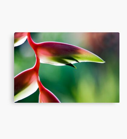 Tropicana - Sexy Pink Flower Canvas Print