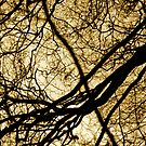 Branches by Richard Pitman