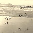 Terns Flight by Louise Linossi Telfer