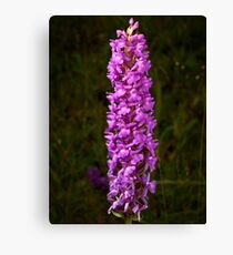Fragrant Orchid Canvas Print