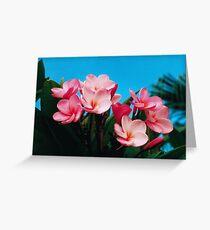 Frangipanis. Greeting Card