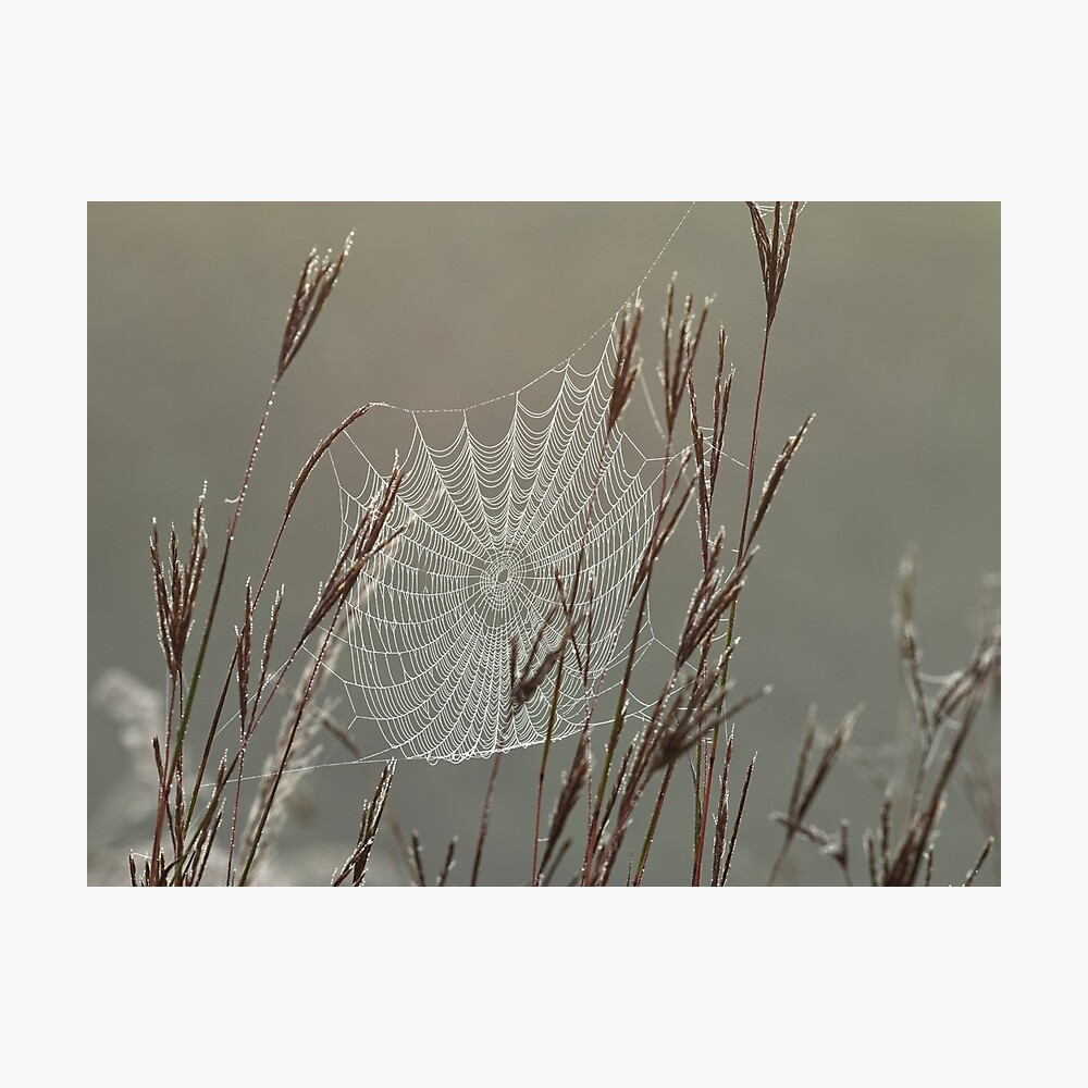 Spiderweb Covered in Dew Photographic Print