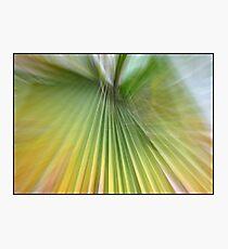 Green queen Photographic Print