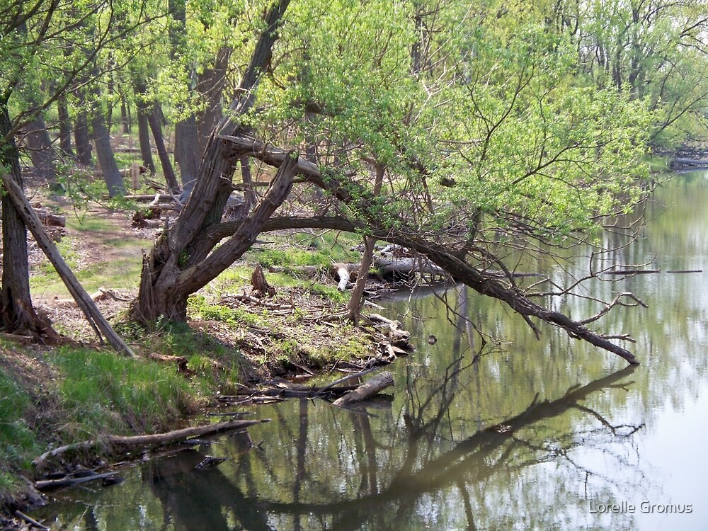 Still Waters by Lorelle Gromus