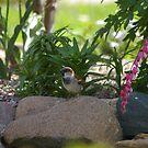 Bird in the Rocks by klziegler