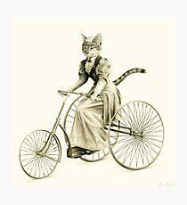 Victorian Cat Series 03 Photographic Print