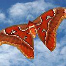 Mariposa (Atlas Moth) by UniqueDesigns