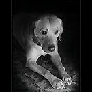 dog and tv by DARREL NEAVES