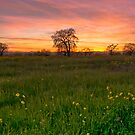 Sebastopol, Back Roads Sunset by MattGranz