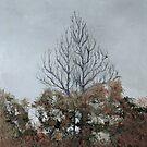 Autumn Rising by TedDwyer