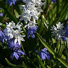 Lively world of blue and white by christopher363