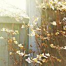 Summer Meadow by Stephanie Hillson