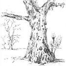 Gum Trees, Flinders Ranges by Barnaby Edwards