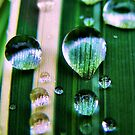 Dew Drops by Jamie Lee