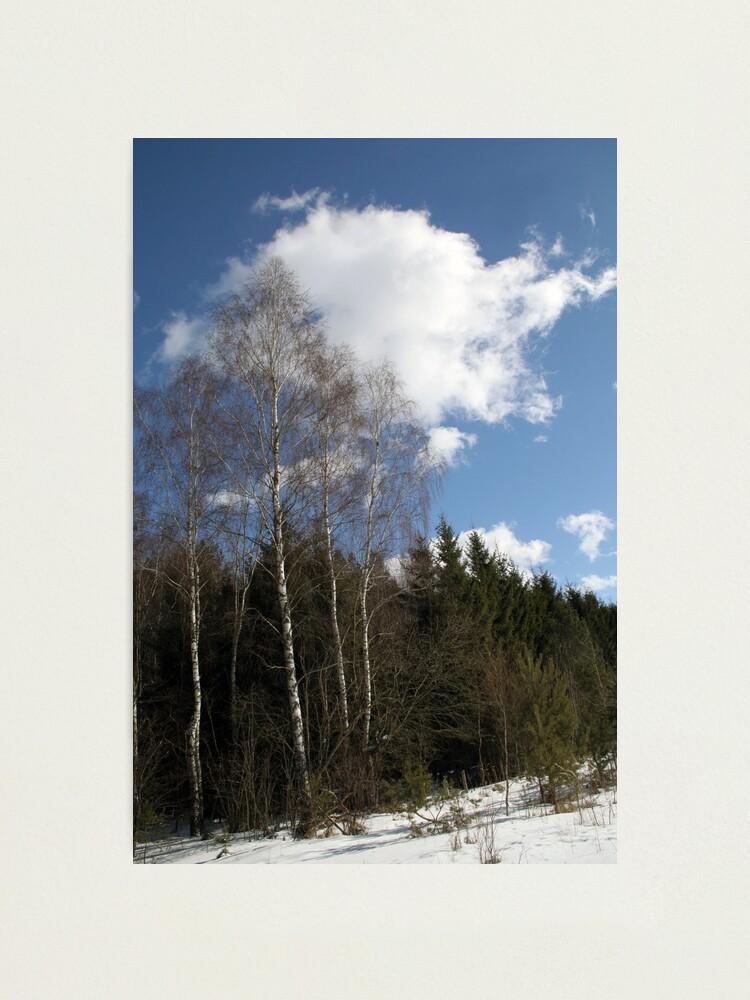 Alternate view of Winter Sunshine Photographic Print