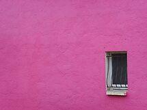 Shocking pink by Carol Dumousseau