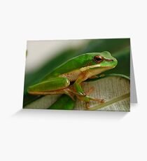 Eastern Dwarf Green Reed Frog - Litoria fallax Greeting Card