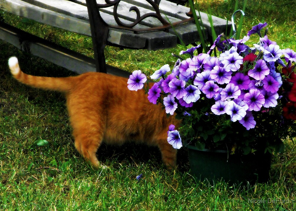 Curiosity And The Cat  by Nicole DeFord