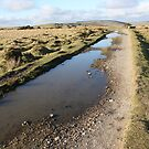Bodmin Moor Track near Cheesewring by winterhare