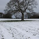 Snowy field in East Cornwall by winterhare