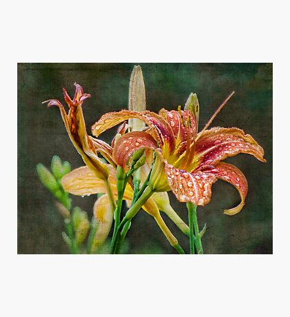 Lilie des Tages Fotodruck