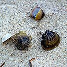 Mussel Shells by Glenna Walker