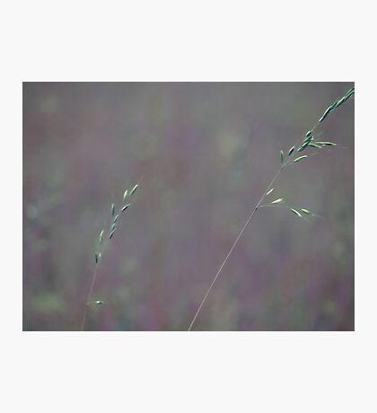 Summer Grass 11 Photographic Print