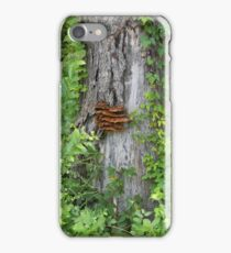 Bracket Fungus or Shelf Fungus iPhone Case/Skin