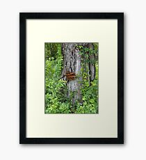 Bracket Fungus or Shelf Fungus Framed Print