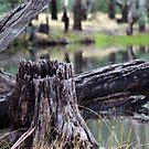 Murray River 6 by djscat