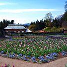 Garden  Colors by kentuckyblueman