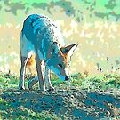 Coyote on the prowl by eyes4nature