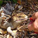 Betty feeding our resident baby lizard by georgieboy98
